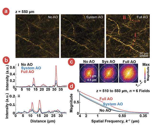 Figure 2. Images of thalamocortical axons in vS1 labeled by SF-Venus-iGluSnFR.A184S under the conditions of no AO, system AO, and full AO (a). Signal profiles of the red lines in (a) are compared among no AO, system AO, and full AO (b). Spectral power as a function of spatial frequency, k, for the images in panels (a) (c). A k-space plot of the spatial frequency from the images of six fields at the depths of 510 to 550 µm below the pia at the conditions of no AO (black), system AO (blue), and full AO (red) (a). Courtesy of Kleinfeld lab.