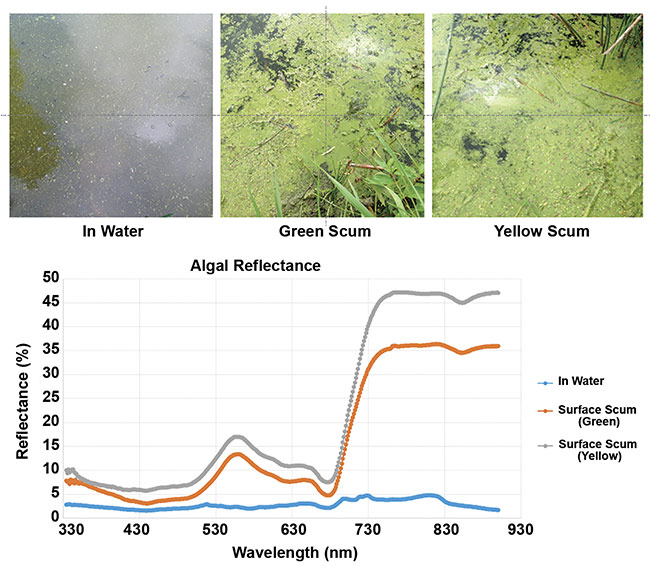 Figure 3. Spectral data of algal reflectance. Courtesy of ASD.