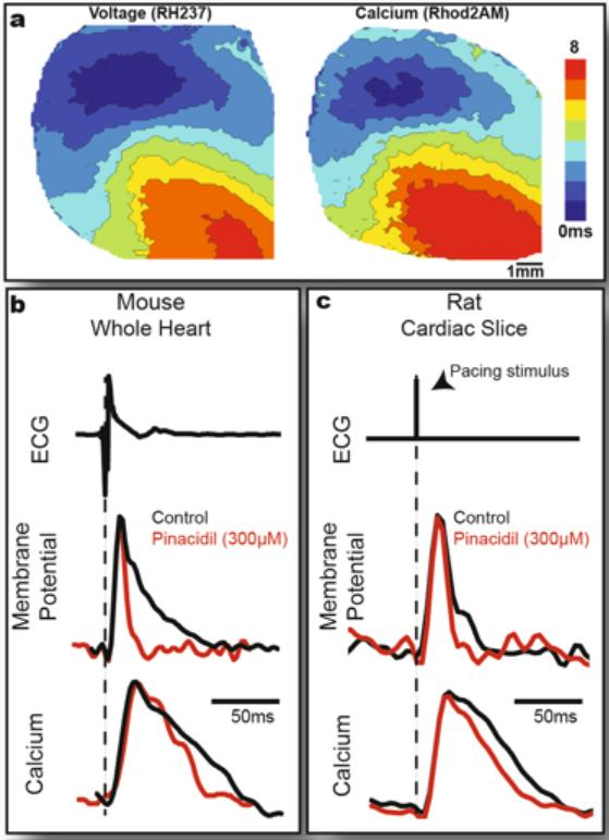 Open source system for multiparametric optical mapping of cardioarhythmmias, GW and MIPT.