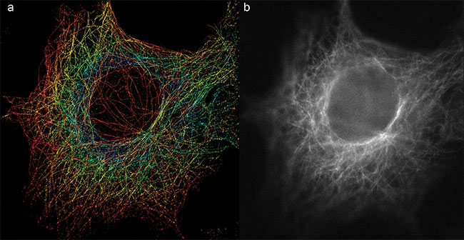 Figure 3. A 3D double-helix PSF (DH-PSF) super-resolution image of microtubules (a) captures the detailed 3D information not seen in conventional 2D wide-field imaging (b). Courtesy of Double Helix Optics.