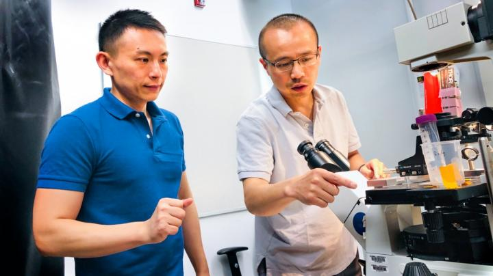 Xianwen Mao, left, and Peng Chen, the Peter J.W. Debye Professor of Chemistry, are pictured in the microscope room in Olin Research Laboratory. Courtesy of Rocky Ye, Cornell University.