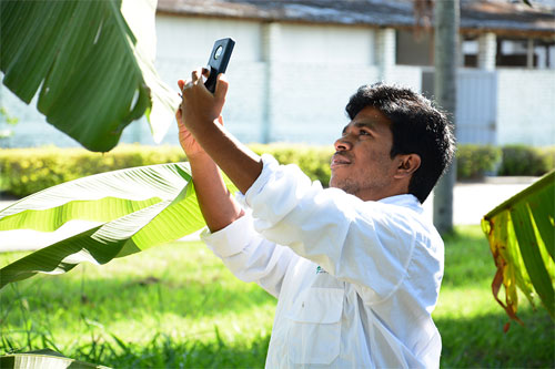 AI-based smartphone app helps banana growers protecct their crops. CIAT.