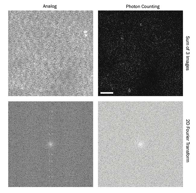 Figure 2. Photon counting reduces noise artifacts. The left column shows the sum of three frames as captured with a well-established analog system. The noise is clearly visible when observing the Fourier transform of that image (bottom). Yet the same imaging conditions provide an improved result when using the photon counting imaging modality (right column), as seen in the resulting Fourier transform. The images show the cortex of a mouse 200 µm below the surface, genetically encoded to express fluorescent proteins in its neurons. They were captured at 15 Hz and span 335 × 335 µm2. Scale bar = 50 µm. Fourier transform images are log-scaled. Reprinted/adapted with permission from Reference 5, The Optical Society.