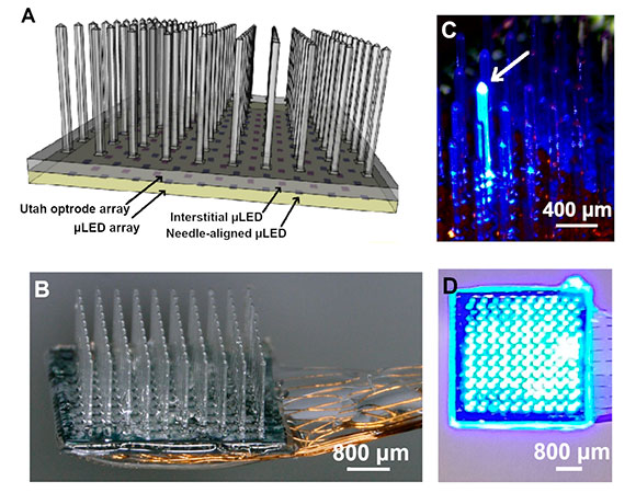 A multisite microLED optrode array for neural interfacing, Universities of Strathclyde and Utah.
