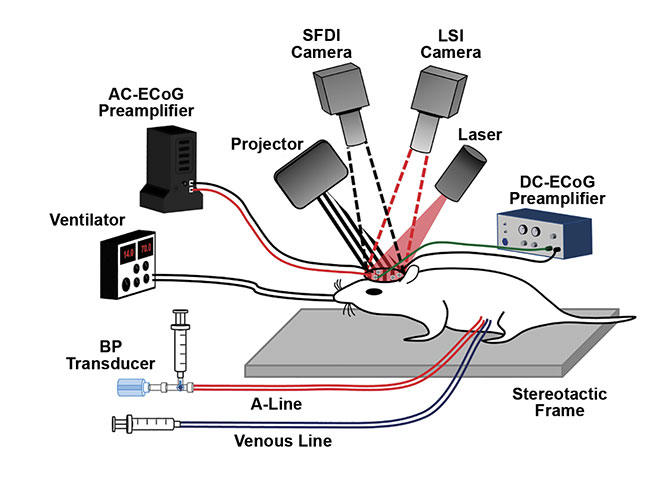 Figure 5. A high-speed optical imaging system in use at the University of California, Irvine to image cognitive activity and decline in live mice. LSI: laser speckle imaging; BP: blood pressure; AC-ECoG: alternating current electrocorticography; DC-ECoG: direct current electrocorticography. Courtesy of Christian Crouzet.