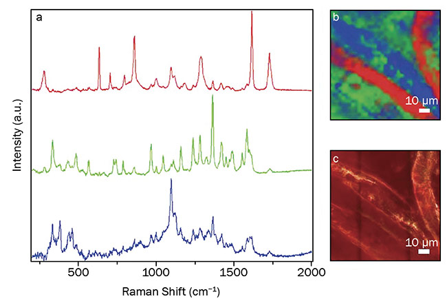 Figure 2. Researchers at HORIBA Scientific used 785-nm excitation to do a line-scan measurement across a fiber located in a sample labeled 100% cotton. The experiment confirmed the presence of polyethylene terephthalate (PET), a synthetic fabric in the sample. Courtesy of HORIBA Scientific.