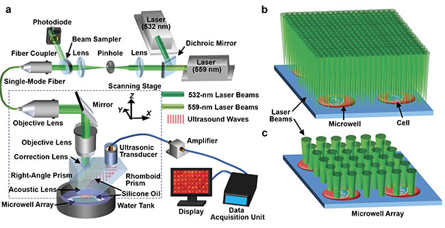 Lihong Wang of the California Institute of Technology developed a photoacoustic microscopy method to image metabolic heterogeneity within individual tumor cells. System schematic of single-cell metabolic photoacoustic microscopy (SCM-PAM) (a). High-resolution mode of SCM-PAM, with optical diffraction limited lateral resolution (b). High-throughput mode of SCM-PAM, with single-cell metabolism measurement throughput of ~3000 cells over 15 min (c). Courtesy of Lihong Wang.