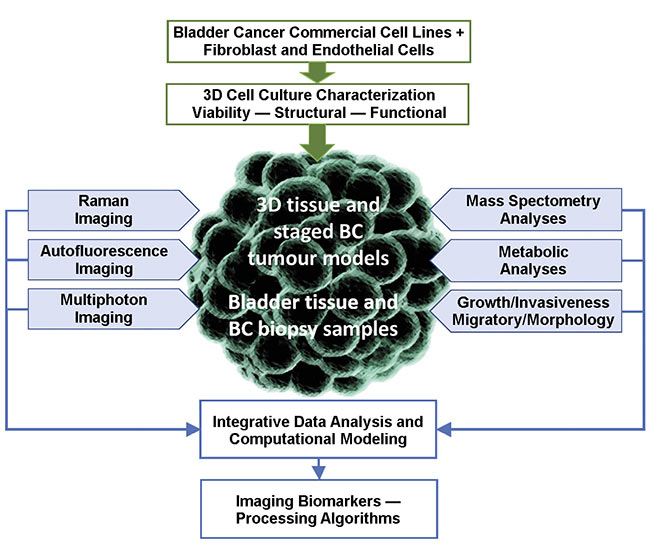 Figure 3. A cell model and ex vivo tissue imaging, and its biological correlation (BC) with imaging biomarkers. Courtesy of MODUS and UNIMIB.