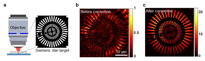 Siemens star resolution target underneath a highly aberrating medium was used as a test sample to be imaged. (b) A conventional optical coherence microscopy image before aberration correction. (c) An aberration-corrected image obtained using the reflection matrix microscopy.