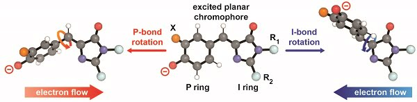 When light hits certain chromophores in proteins, it causes them to twist and change shape. This atomic reconfiguration, known as photoisomerization, changes the molecule's chemical and physical properties. The hallmark of this process is a rotation that occurs around a chemical bond in the molecule. New research shows that the electric fields within a protein play a large role in determining which bond this rotation occurs around. Courtesy of Stanford University.