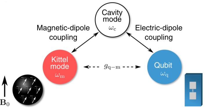 Schematic of modes of interest in the single-magnon detector. The uniformly-processing mode of collective spin excitations in the ferromagnetic crystal, called Kittel mode, is coherently coupled to a superconducting qubit through a microwave cavity mode. Courtesy of Dany Lachance-Quirion.