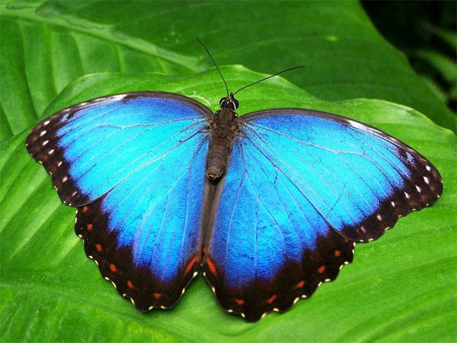 UCF researchers have created new technology to display color that uses nanoscale structures inspired by butterflies and other animals. Courtesy of Garoch from Pixabay.