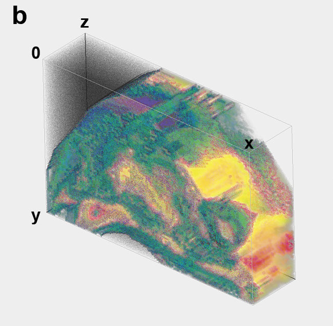 Figure 4. Tumor growth imaging in a live mouse thigh. 3D eTC-PCT amplitude image of the thigh with the right corner removed before tumor injection (a). Amplitude image of the thigh on day three after injection of the cancer cells in the tissue, revealing the penetration depth of the tumor (b). Amplitude image of the thigh nine days after injection of the cancerous cells (c) and 2D filtered image of the tumor on day nine, providing more details of blood vessels (d). On day three, tumor size is much smaller than on day nine. Image size: 1.35 × 1.08 cm; depth scale: ~2 mm. Courtesy of University of Toronto.