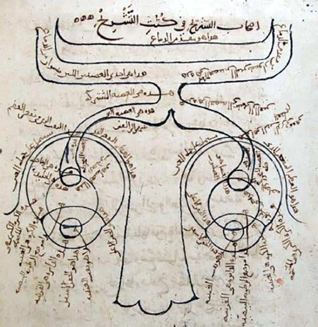 Ibn al-Haytham's diagram of the structure of the human eye, as found in the Book of Optics. Courtesy of Kitab al-Manazir, Süleimaniye Mosque Library, Istanbul.