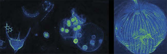 Microscopy Technique Enhances 3D Imaging Capability