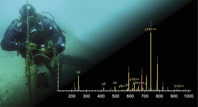 Researcher Enrique Arboleda collects light measurements underwater. Mass spectroscopy measurements that focused on the heads of marine bristle worms reveal the levels of neuropeptides — proteins that enable communication between neurons — that are found under various lighting conditions.