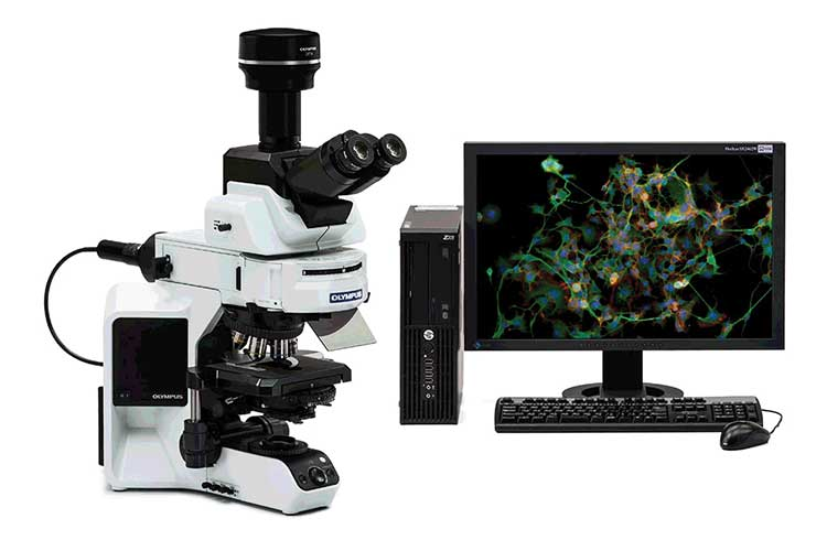 Color Fluorescence Microscope Camera