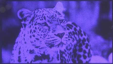 Wide Video Graphic Array GaN Microdisplay