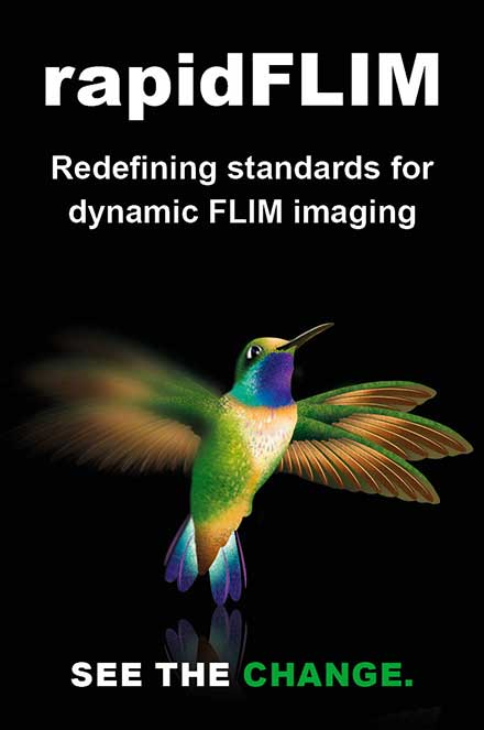 High speed imaging with rapidFLIM