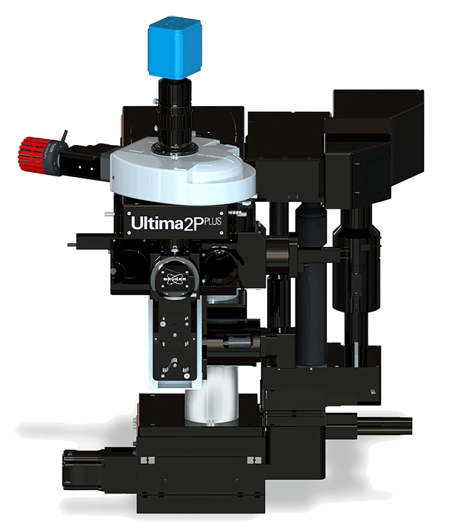 Ultima 2Pplus Multiphoton Imaging